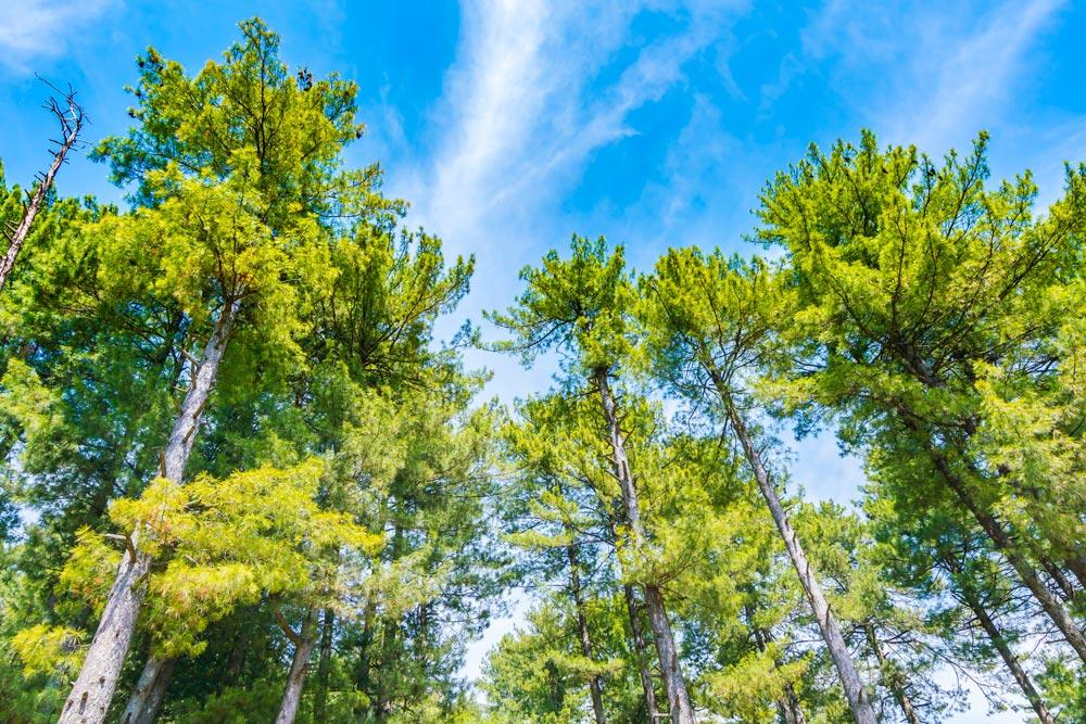 Biomasse, fonte energetica rinnovabile e sostenibile